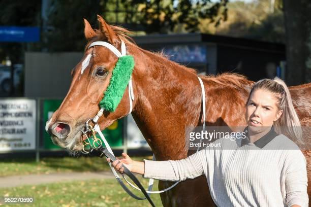 Pamela Joy after winning the Lodge of the Golden Fleece Slipper Class 1 Handicap at Kyneton Racecourse on April 28 2018 in Kyneton Australia