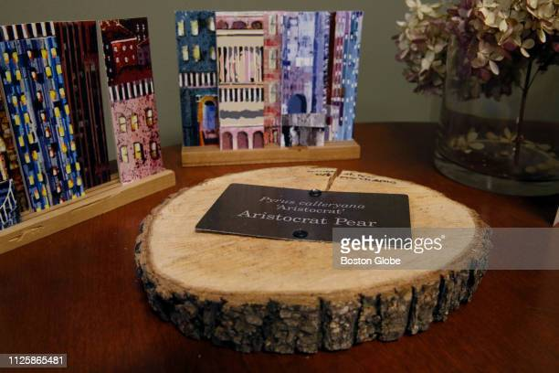 Pamela Messenger general manager of Friends of Post Office Square displays a tree ring of an Aristocrat Pear tree in her office in Boston on Feb 6...