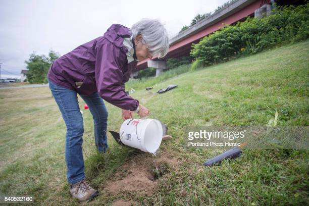 Pamela Shaw of the West End Neighborhood Association fills a hole with water while planting blight resistant American chestnut seedlings at...