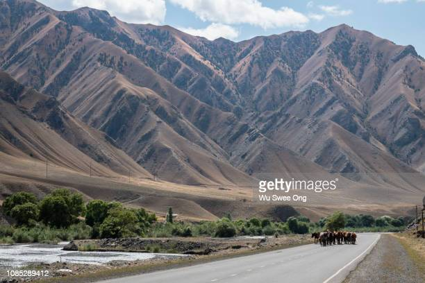 pamir highway from osh kyrgyzstan - osh stock pictures, royalty-free photos & images