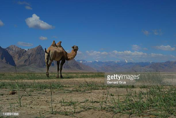 pamir mountains and plateau vessel - bernard grua photos et images de collection
