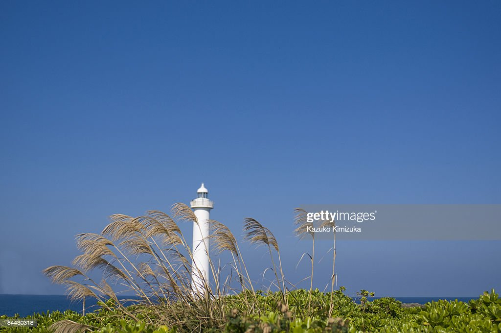 Pampas grass n lighthouse : ストックフォト