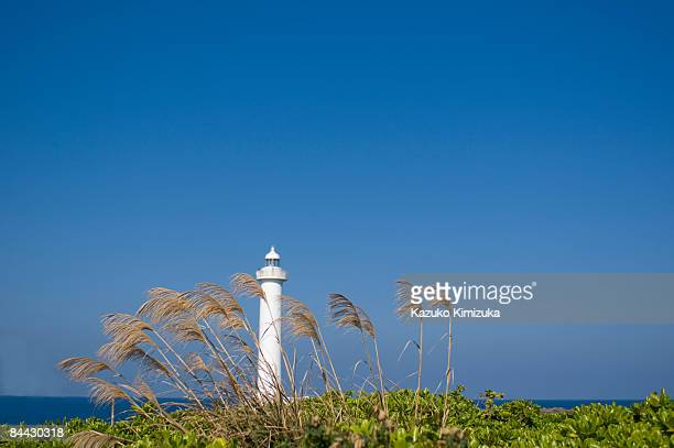 pampas grass n lighthouse - kazuko kimizuka stockfoto's en -beelden