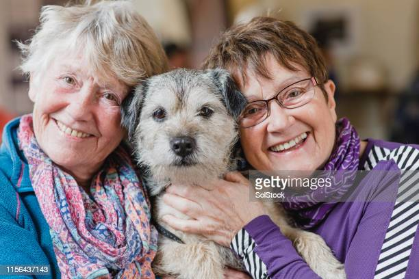 pampered pet - border terrier stock pictures, royalty-free photos & images