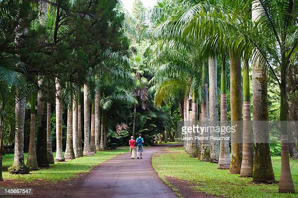 Pamplemousses gardens, north Mauritius