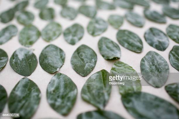 Pan leaves with chilli paste dry inside the research and development kitchen at Gaggan restaurant in Bangkok Thailand on Friday May 5 2017 After his...
