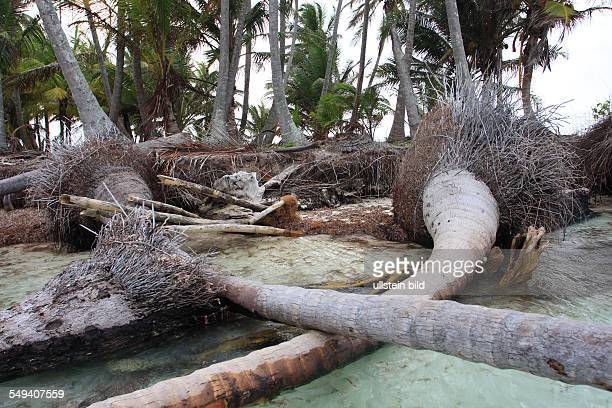 PAN Panama central America San Blas Coco Banderos Cays island group in the area Kuna Yala Because of the climate change the sea level rises and wash...