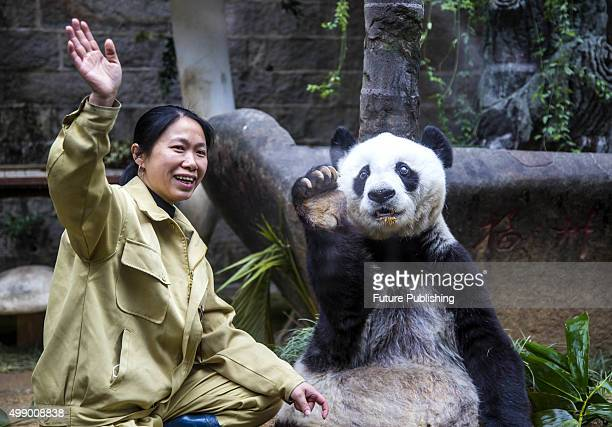 Panda Basi gestures to the audience coming to her 35th birthday party at the Panda Research Center on November 28 2015 in Fuzhou China Basi...