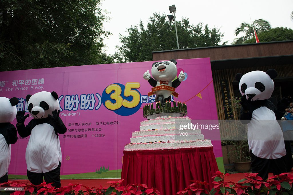 Panda dolls and birthday cake get prepared for giant panda Basi during its 35th birthday at Fuzhou Panda World on November 28, 2015 in Fuzhou, Fujian Province of China. Basi celebrated her 35th birthday which roughly equals 130 years in human age. It is currently the oldest living panda so far in the world. Basi visited the U.S. San Diego Zoo for shows in 1987. She attracted around 2.5 million visitors during her six-month stay in the United States and amazed many visitors by her acrobatic performances. In 1990, she was chosen as the prototype for Pan Pan, the mascot for the Beijing Asian Games.