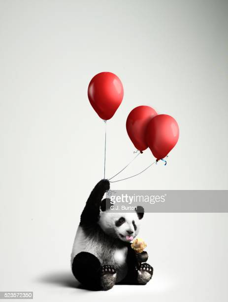Panda holding balloons, licking ice cream