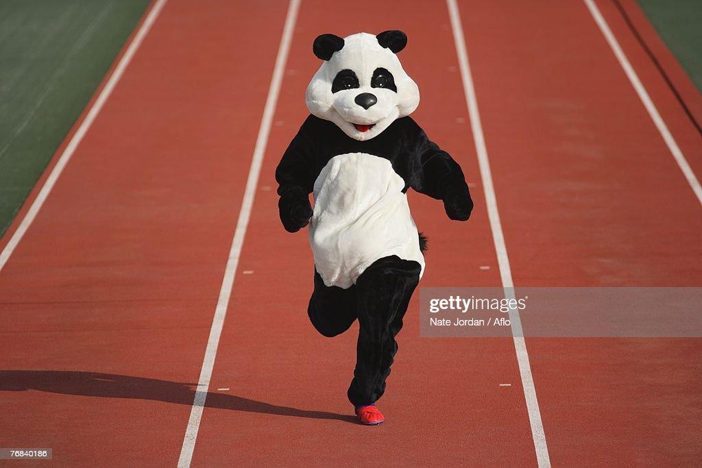 Panda Sprinting on a Track : Stock Photo
