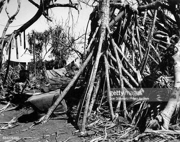 Pandanus Trees at Military Camp