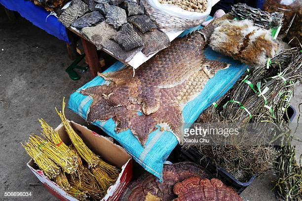 Pangolin's skins are on sale in Mongla market for 100CNY for a small scale on December 22 2015 in Mongla Burma Pangolin has enlisted class II...