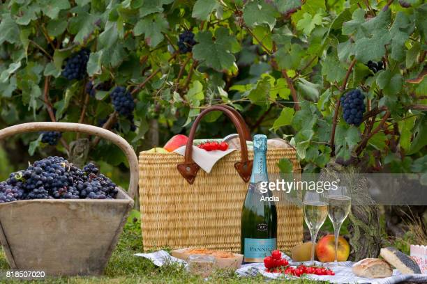 Pannier Champagne at Chateau Thierry picnic basket champagne and bunches of grapes in the middle of the vines