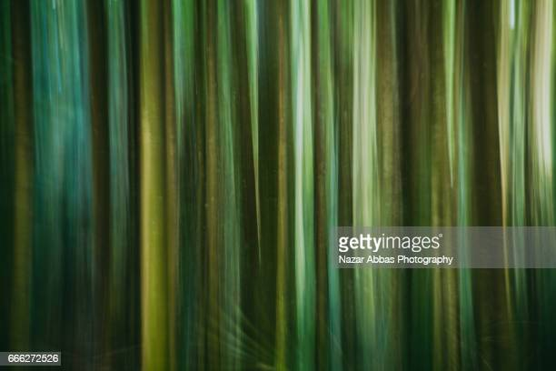 Panning Effect Of Trees.