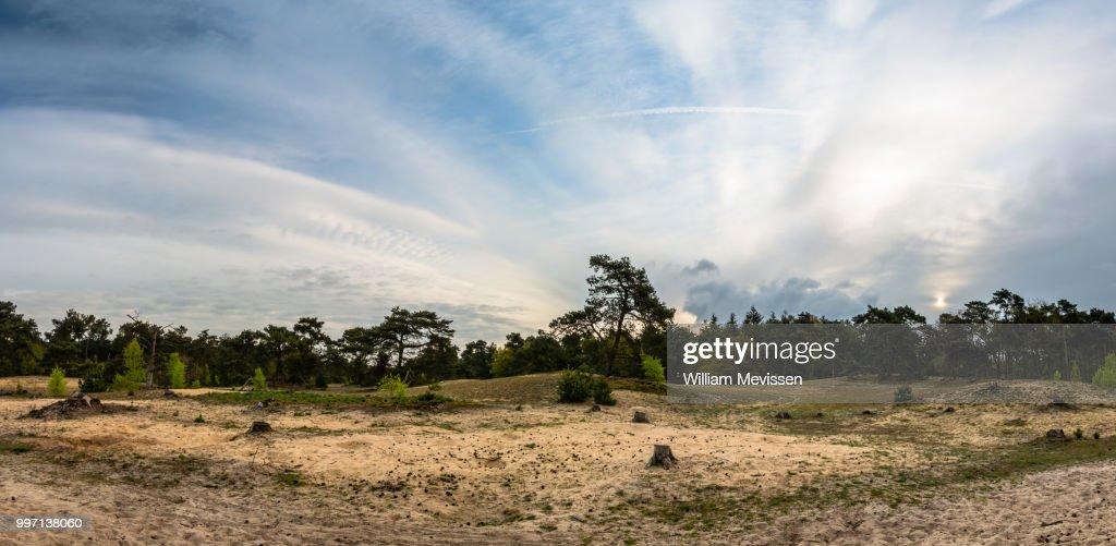Panorama - Bosserheide : Stockfoto