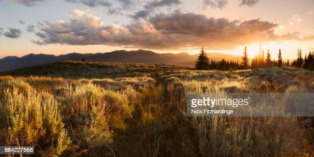 a panorama from the western slopes of mt kobau at sunset, south okanagan, british columbia, canada - sagebrush stock pictures, royalty-free photos & images