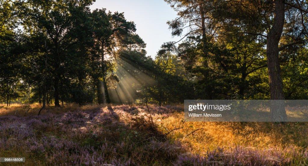 Panorama - Heather Light Rays : Stockfoto