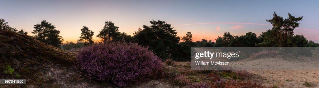 Panorama - Heather Twilight View : Stockfoto