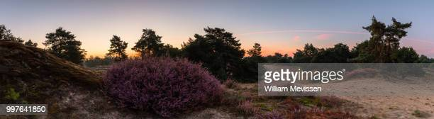panorama - heather twilight view - william mevissen stockfoto's en -beelden