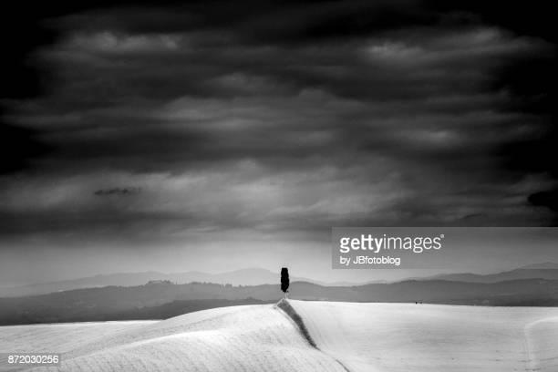 panorama in bianco e nero con cipressi della val d'orcia - bianco e nero stock pictures, royalty-free photos & images