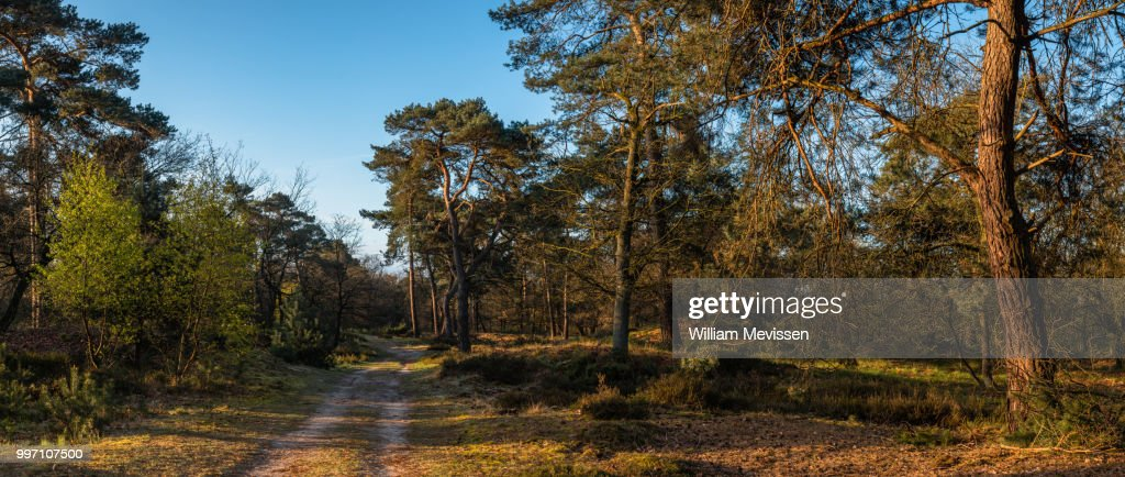 Panorama - In The Forest : Stockfoto