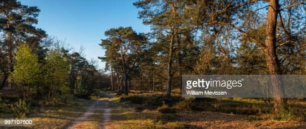 panorama - in the forest - william mevissen bildbanksfoton och bilder