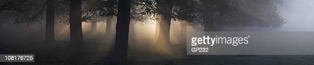 Panorama-Landschaft mit Nebel und Forest