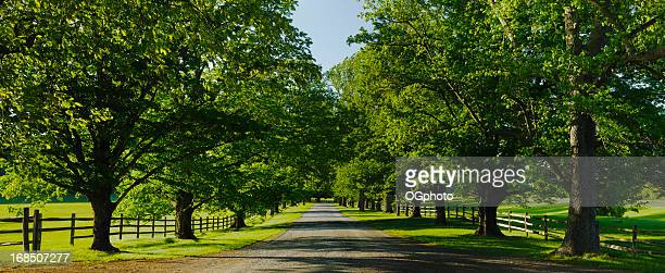 xxxl: panorama of a rural scene - ogphoto stock pictures, royalty-free photos & images