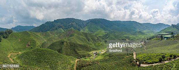 Panorama Of A Tea Plantation In The Cameron Highlands, Malaysia