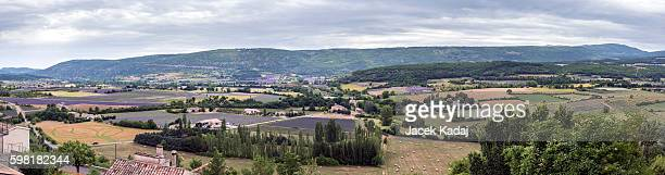 Panorama of blooming lavender fields