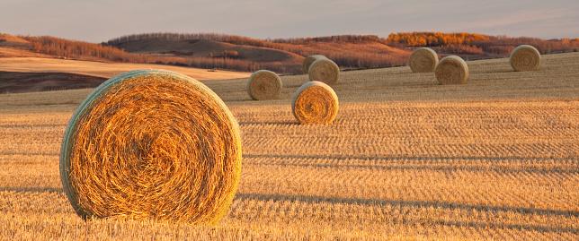 Panorama of Hay Bales on the Prairie in Fall 184867882