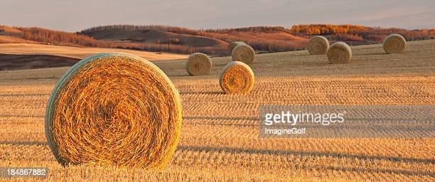 Panorama of Hay Bales on the Prairie in Fall