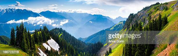 panorama of hurricane ridge, olympic national park - olympic park stock pictures, royalty-free photos & images