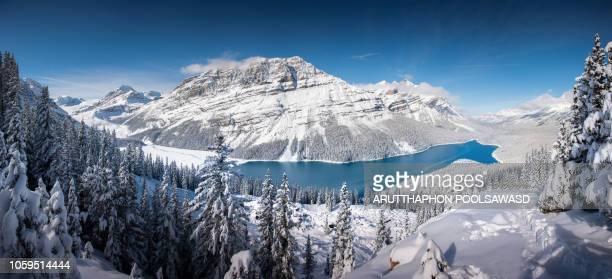 panorama of landscape winter mountains and snow , peyto lake , banff , alberta , canada - canadian rockies stock pictures, royalty-free photos & images