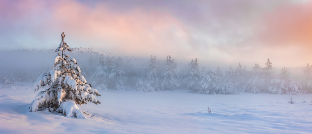 Panorama of misty sunrise in the winter forest in the mountains - gettyimageskorea
