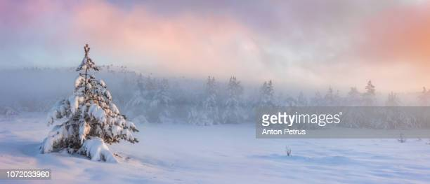 Panorama of misty sunrise in the winter forest in the mountains