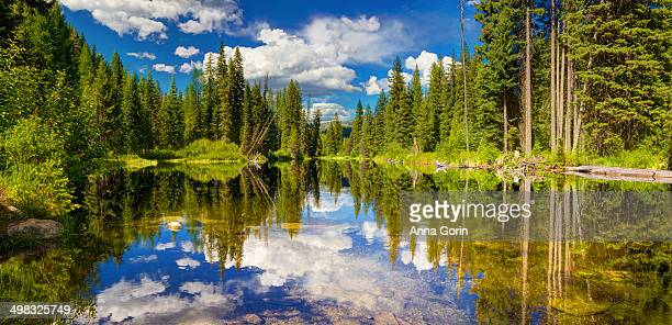 Panorama of reflections in outlet of Payette Lake