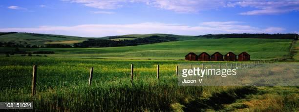Panorama of Rural Farm Landscape