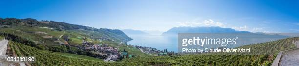 panorama of the famous lavaux vineyard terraces - ヴォー州 ストックフォトと画像