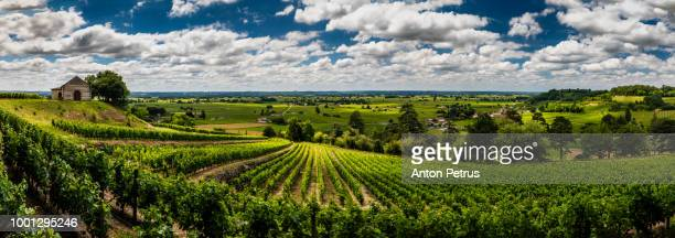 panorama of vineyards under the beautiful sky with clouds. bordeaux, france - panoramique photos et images de collection
