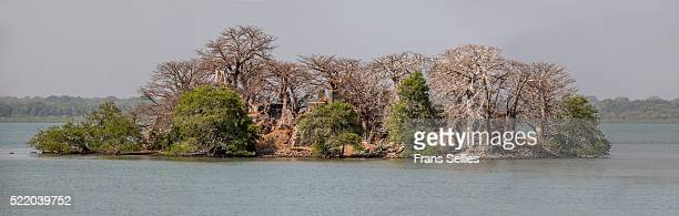 panorama photo of kunta kinte island, formerly james island, the gambia - black history fotografías e imágenes de stock