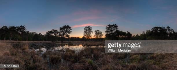 panorama 'pink silence' - william mevissen bildbanksfoton och bilder