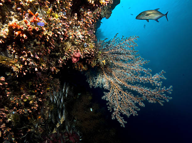 Panorama reef in Siladen Island