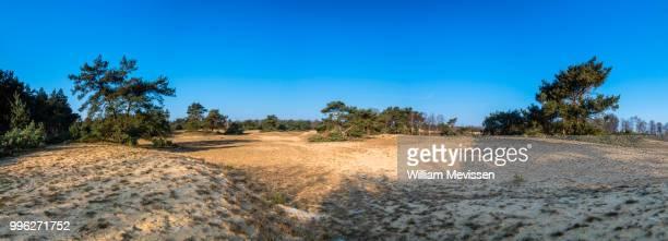 panorama 'stuifduinen' - william mevissen bildbanksfoton och bilder