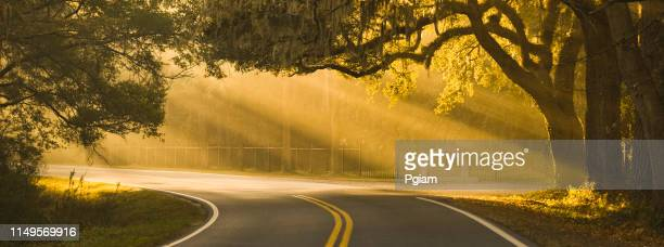 panorama sunlight rays shine through oak trees on a road in savannah georgia usa - georgia stati uniti meridionali foto e immagini stock