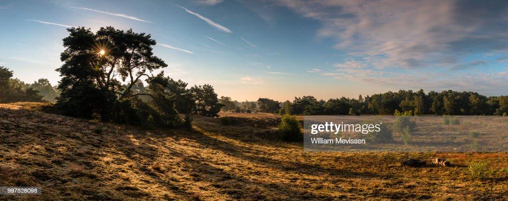 Panorama - Sunrise Bergerheide : Stockfoto