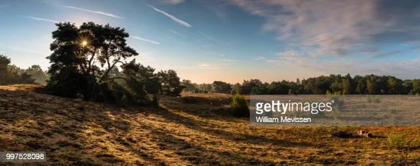 panorama - sunrise bergerheide - william mevissen - fotografias e filmes do acervo