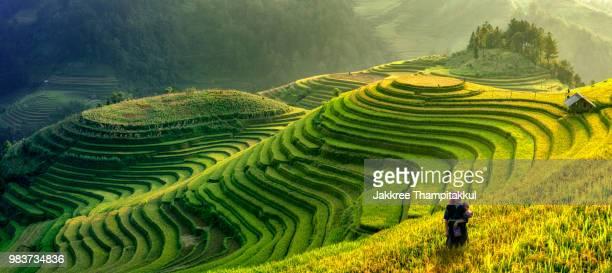 panorama symbol of vietnamese rice terraces,mu cang chai.yenbai, - rice terrace stockfoto's en -beelden