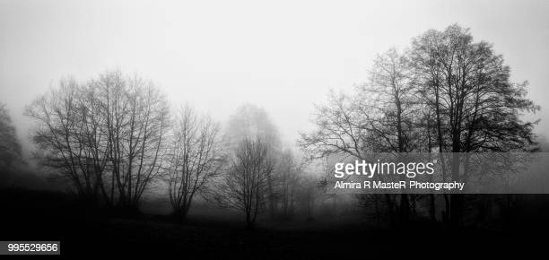 panorama tree - bare tree stock pictures, royalty-free photos & images